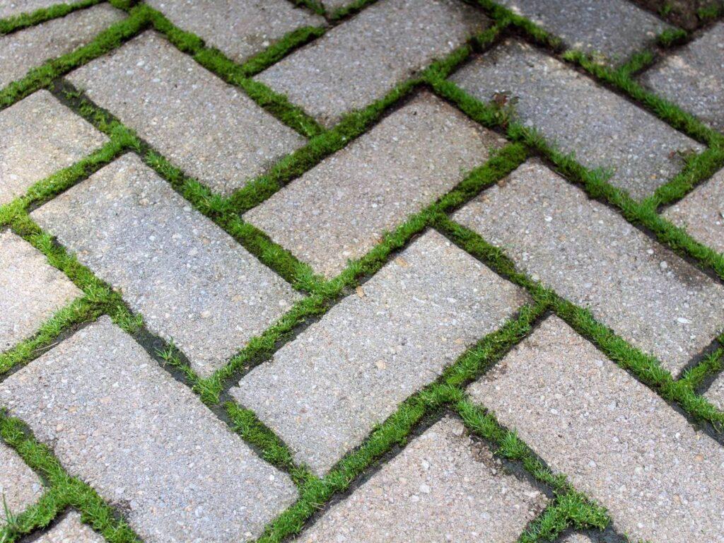moss in between pavers