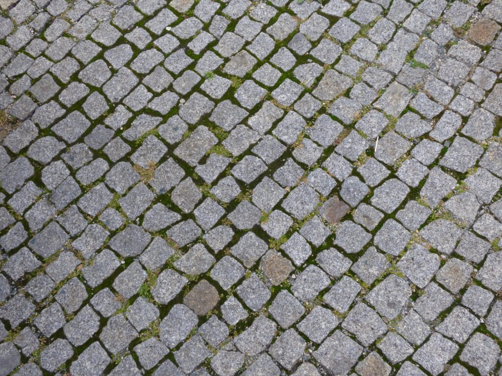 Dirty paving stones with black mold and algae