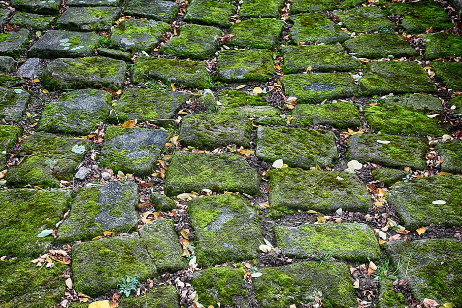 Pavers covered in moss.